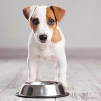 Hundeernährung – Gewusst wie!